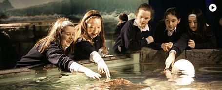 aquarium ireland