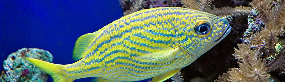 Dingle Aquarium