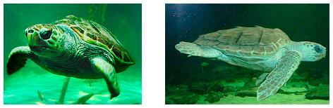 turtles dingle aquarium