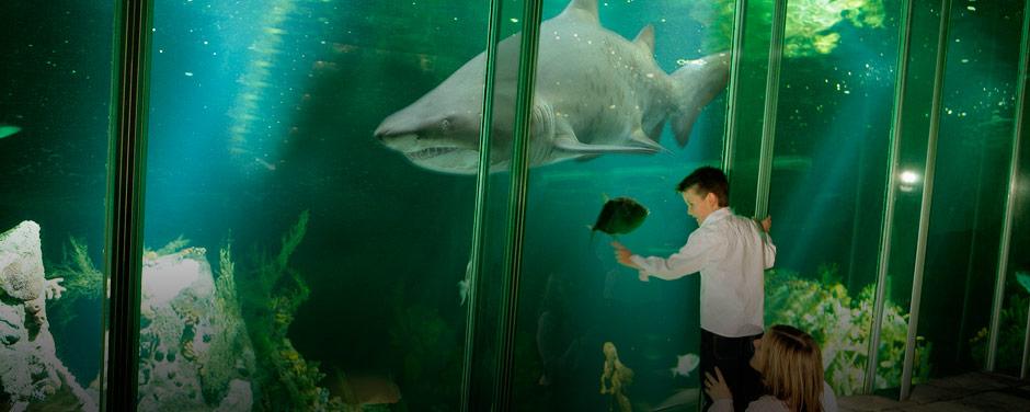 Shark tank Dingle Aquarium
