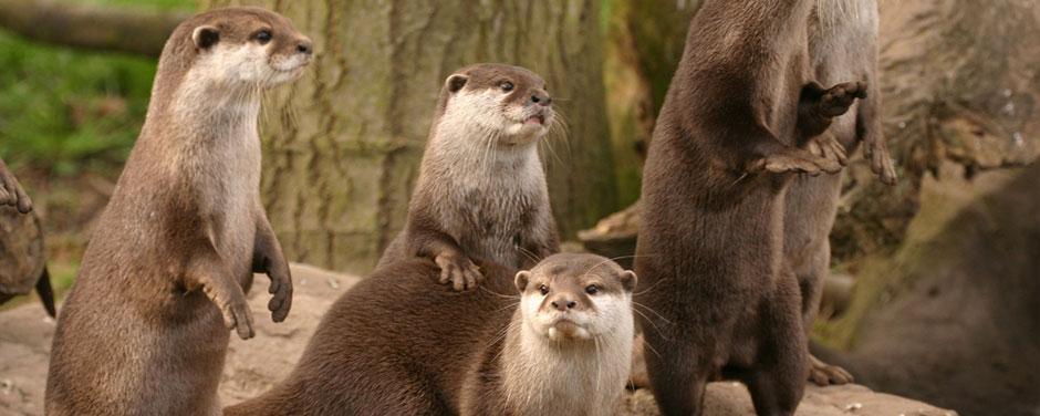 otter-banner2