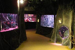 amazon displays dingle oceanworld