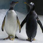 Dingle Oceanworld Penguin News