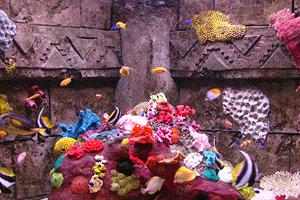 tropical tanks dingle oceanworld