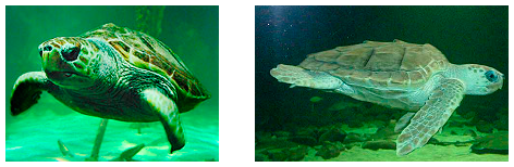 turtles dingle aquarium
