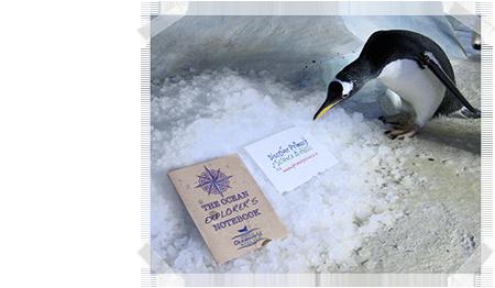 Dingle Oceanworld Penguins