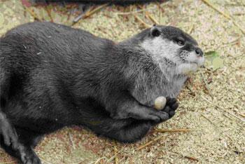 otter-stones