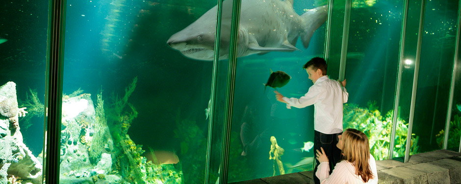 Shark tank Dingle Oceanworld