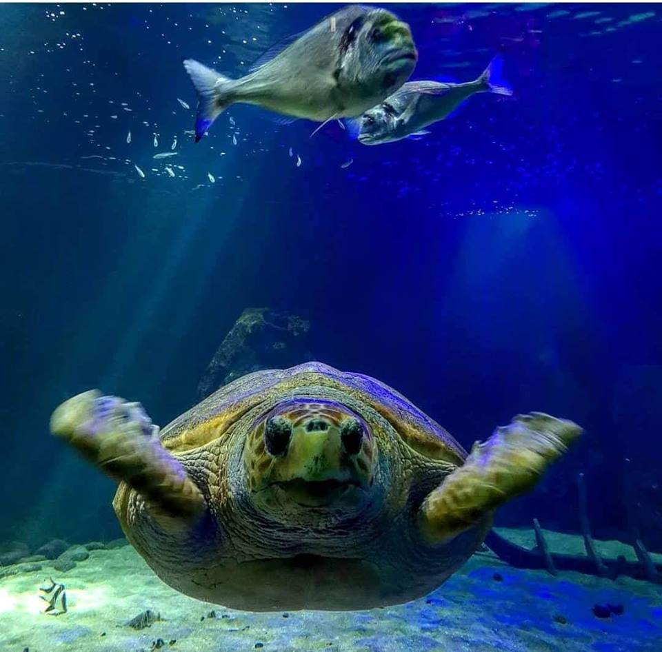 Molly the turtle at Dingle Oceanworld