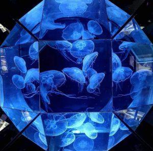 Dingle Aquarium jellyfish