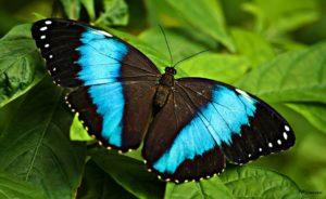 butterfly on green