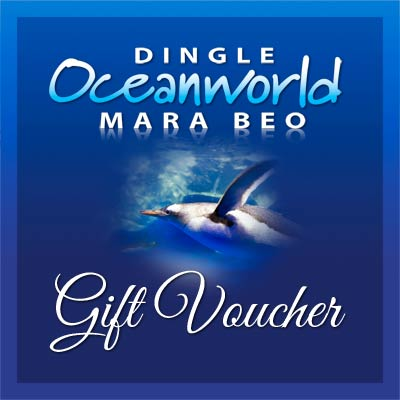 Dingle Oceanworld online gift voucher