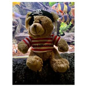 Pádraig the Pirate Bear